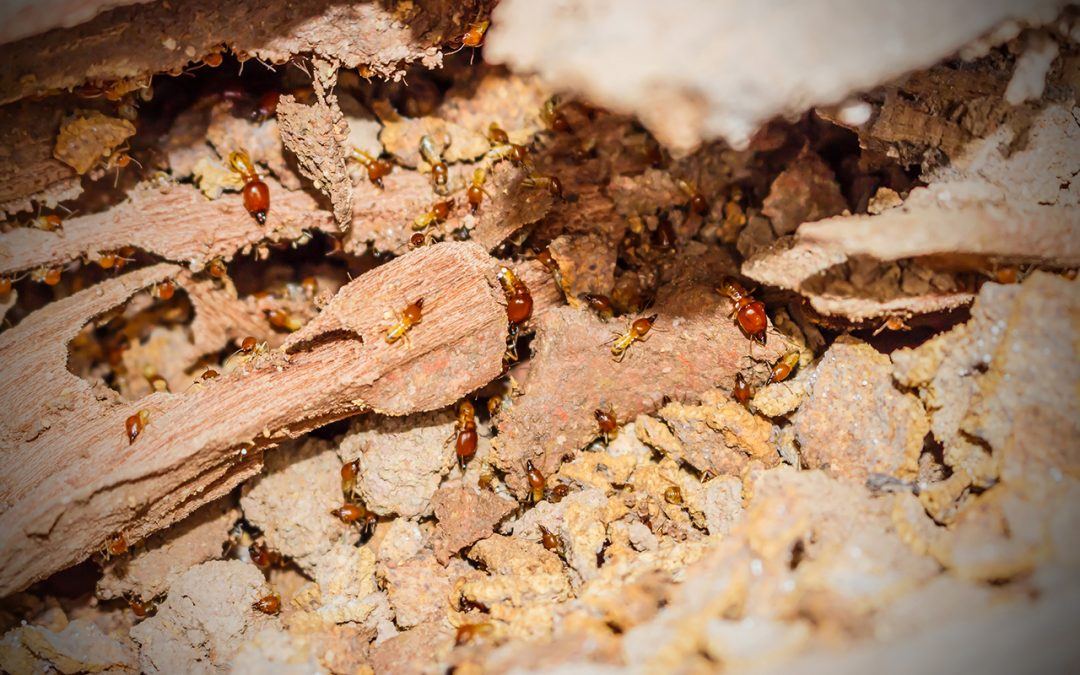 prevent a termite infestation