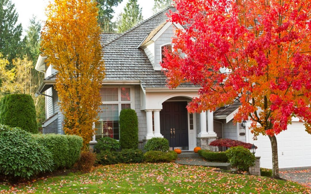 caring for your trees in fall